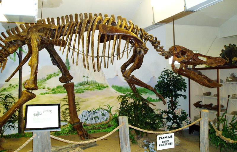 anatotitan1.jpg