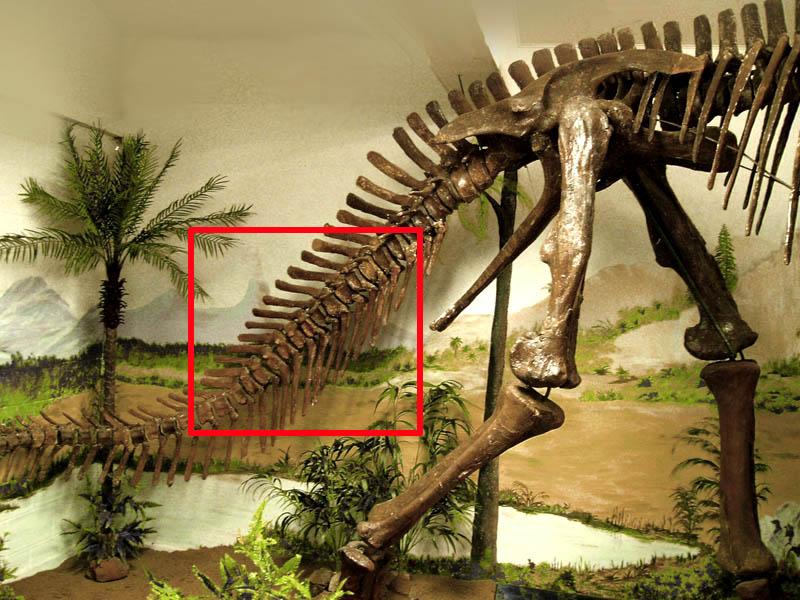 anatotitan2.jpg