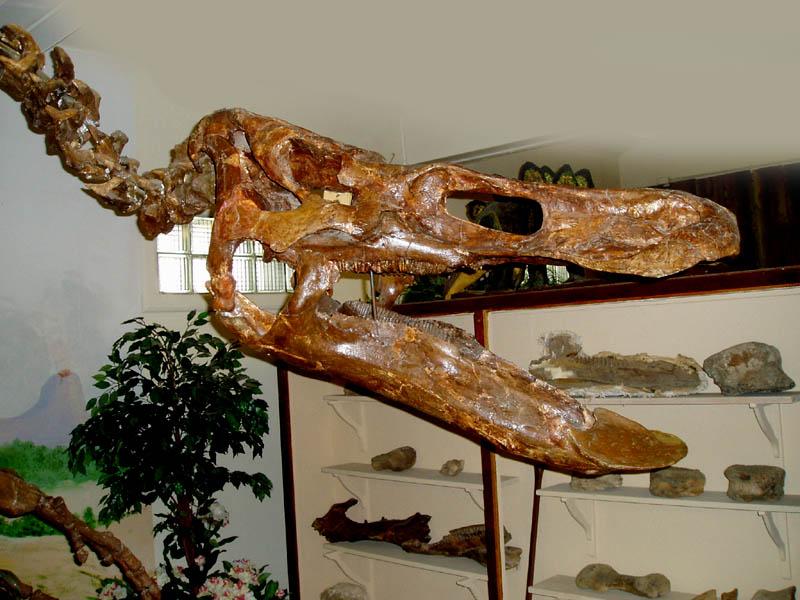 anatotitan3.jpg