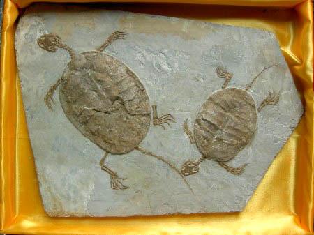 نتيجة بحث الصور عن fake fossils - AMAZING Discoveries That Turned Out To Be A FRAUD!