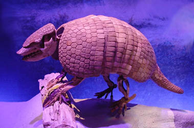 giant armadillo fossil