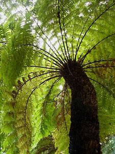 plantfossilintro.jpg