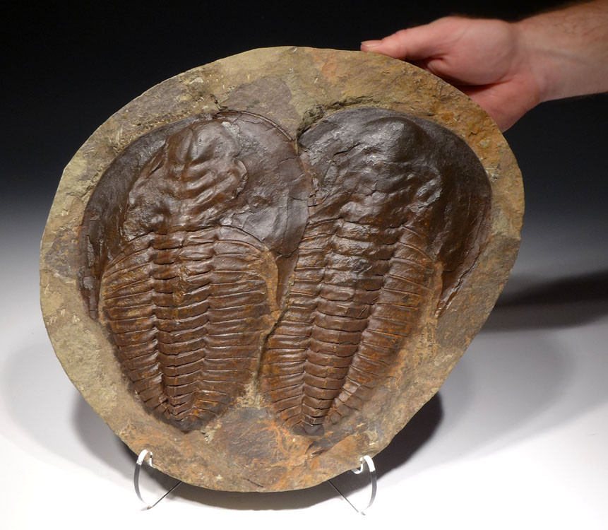 Cambrian Period: Facts & Information