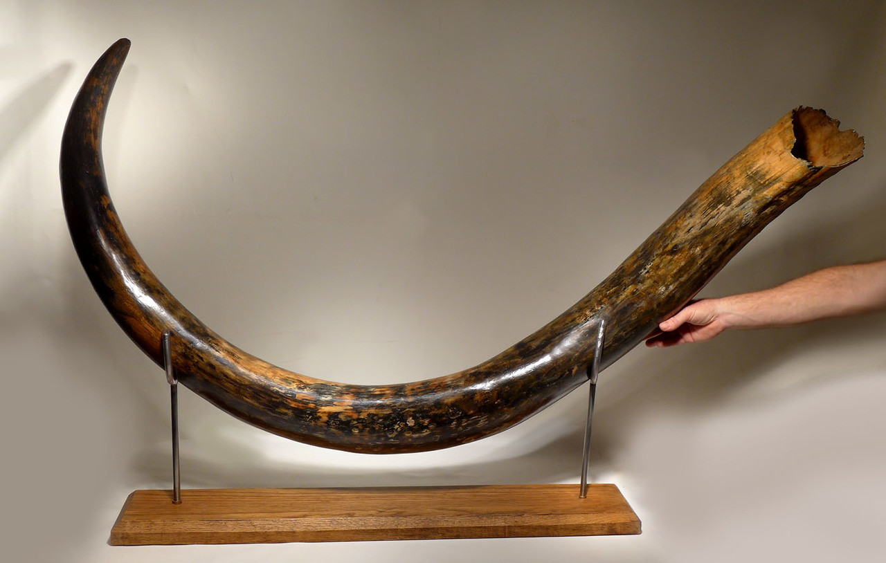 Mammoth tusks: mining, products 83