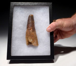 DT5-292 - RARE 4.75 INCH SPINOSAURUS FOSSIL TOOTH FROM A HUGE DINOSAUR