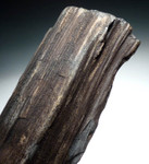 PL061 - MIOCENE PERIOD PETRIFIED WOOD LOG FOSSIL WITH INCREDIBLE DETAIL