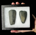 CAP104 - AFRICAN NEOLITHIC SET OF TWO GROUND STONE AXES