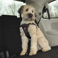 Easy Rider by Coastal Pet Adjustable Car Dog Harness Black