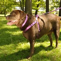 Coastal Pet Adjustable Nylon Comfort Wrap Dog Harness With Dog