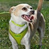 Coastal Pet Comfort Soft Wrap Adjustable Dog Harness Personalized