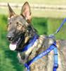 Coastal Pet Adjustable Nylon Comfort Wrap Dog Harness Personalized