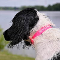 Coastal Pet Waterproof Personalized Dog Collar Personalized