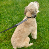 Coastal Pet Bungee Dog Leash on dog sitting