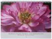 Calendar Cover - Momo Botan Hardy Water Lotus