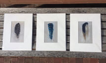 Feather Project Matted Prints