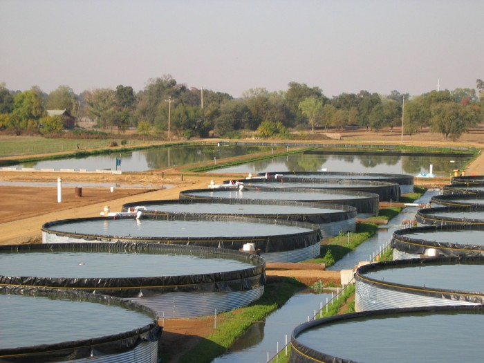 plaza-aqua-farm.jpg