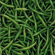 Green Beans  From Paintbrush Studio