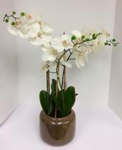 Silk Phalaenopsis Orchid Plant in Ceramic