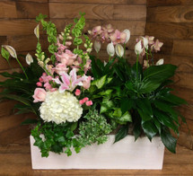 """Large Whitewashed Wooden Window Box with Mixed Green and Blooming Plants and Fresh Cut"