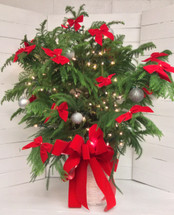 Decked out Norfolk Island Pine with Bows, Balls, and Lights