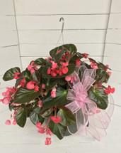 """12"""" Mega Watt Begonia Hanging Basket"""