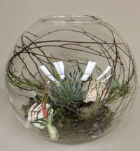"18"" Succulant and Airplant Globe Terrarium"