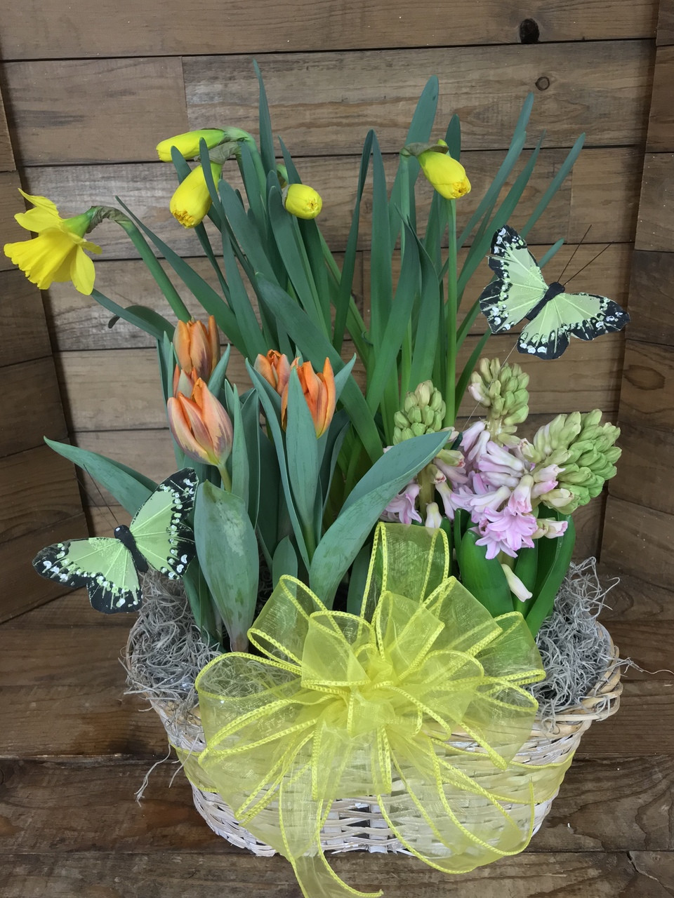 Triple Basket Of Potted Spring Bulbs And Butterflies Centerville