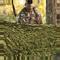 Hunting Series Camo Netting - Woodland