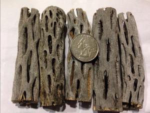 3 inch cholla wood, 5 pieces