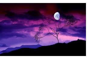 purplelft.jpg
