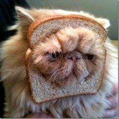 sillycat.jpg