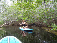 Mangrove Tours (SUP - Kayak)
