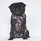 ref-the-pug-by-kristy-beck-16052015-0013.jpg
