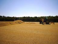 December Coffee Releases: Burundi Long Miles Coffee Project and Brazil Cerrado