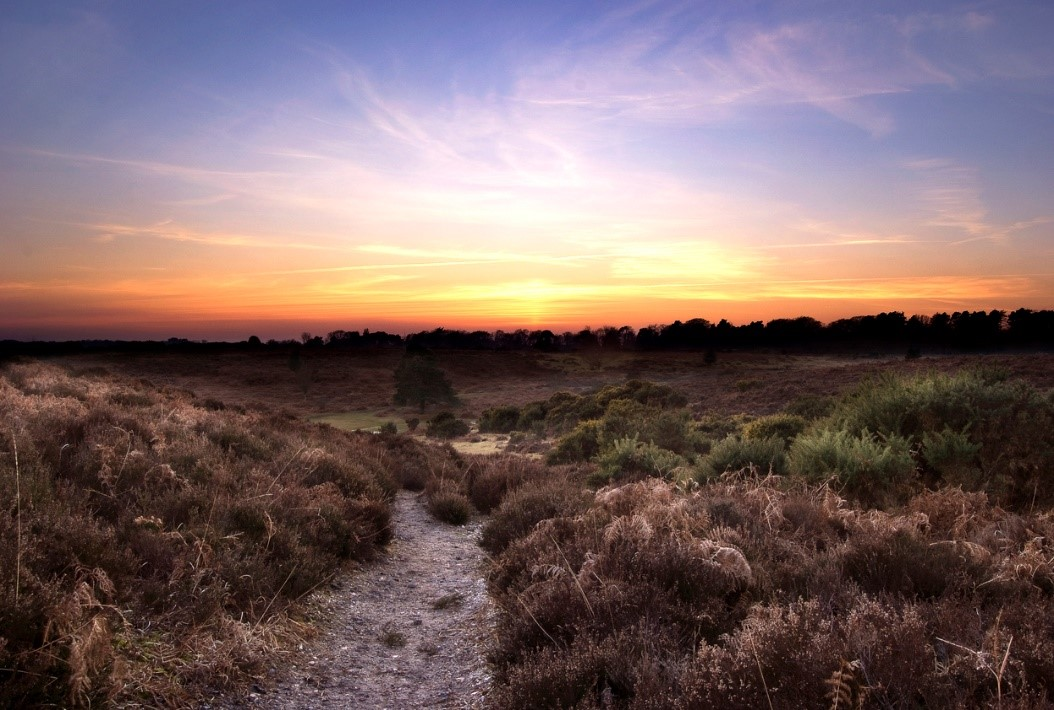 The New Forest in Hampshire