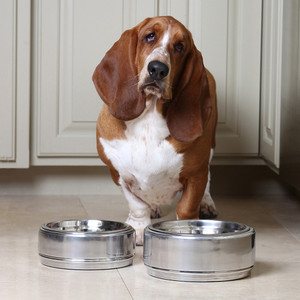 Chadwick Dog Bowl Collection