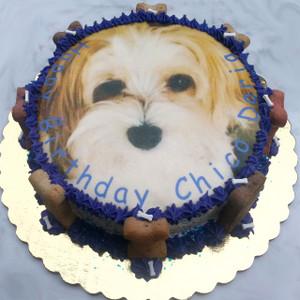 Dog Birthday Cake   Photo Image