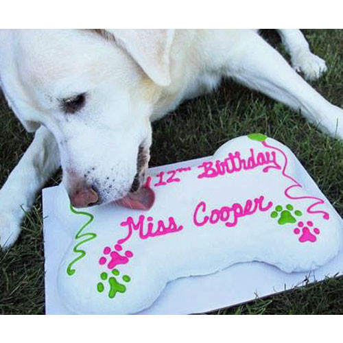 Dog Birthday Cake   Giant