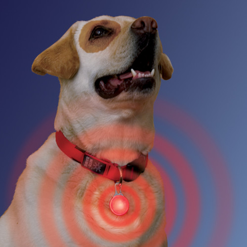 LED Light Up Collar Tag | 2 Colors