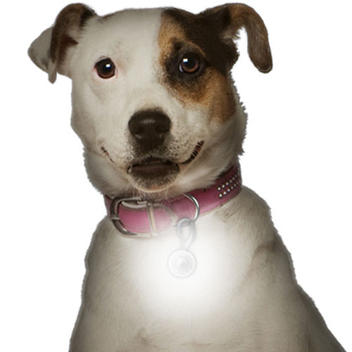 LED Light Up Collar Tag | White