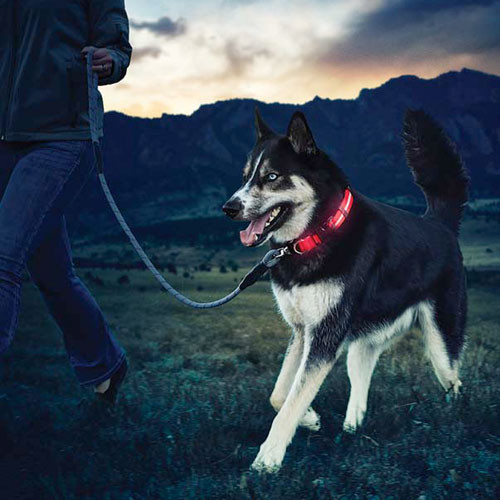 Nite Dawg LED Collar