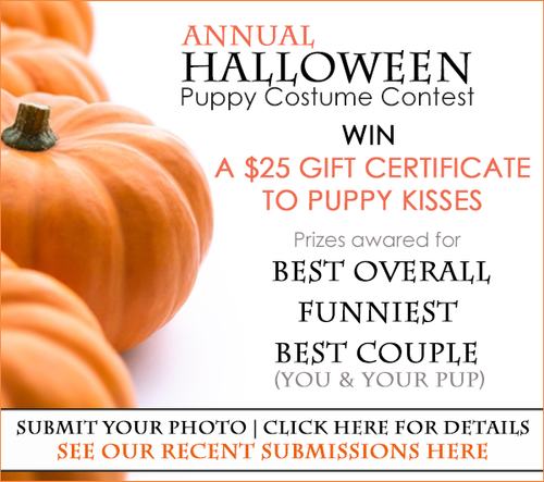 Puppy Halloween Costume Contest 2017