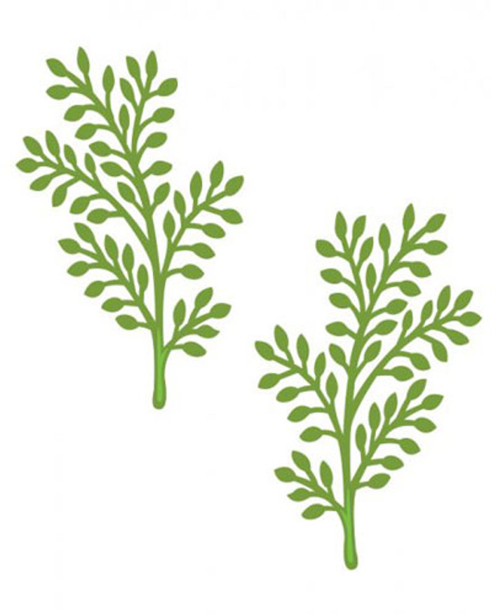 Sue Wilson - The Finishing Touches Collection - Delicate Fronds Dies CED1426 - Pre-Order 15% Off