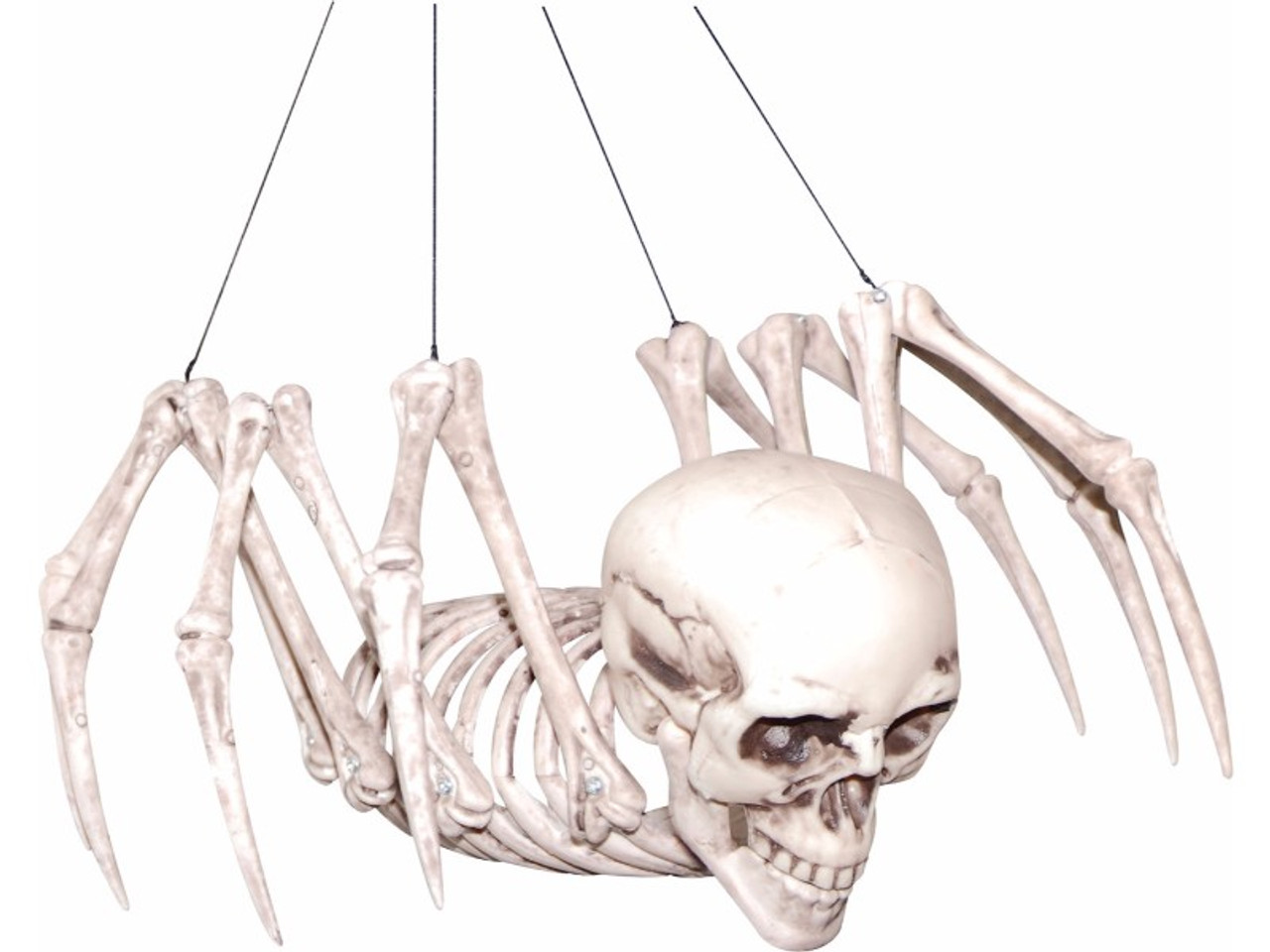 spider skeleton with human skull, Skeleton