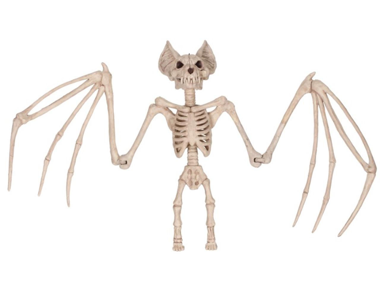 Bat wing skeleton - photo#34