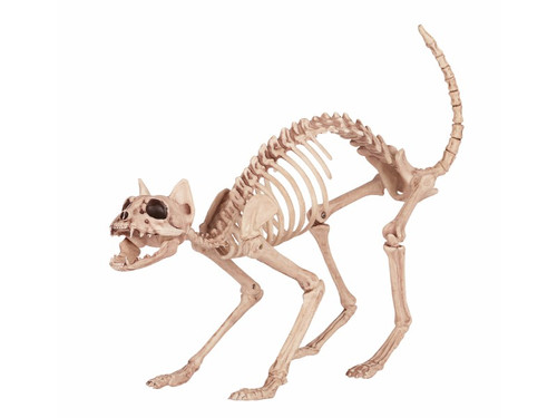 This cat is on the prowl, but dead!  His amazing skeleton frame is made of heavy injection plastic. He has a moveable jaw and bendable tail. Measures 18.00 X 5.50 X 10.25 inches.