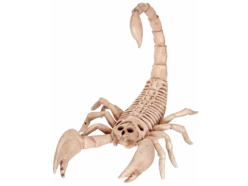 Small but deadly, this skeleton scorpion is going to creep everyone out who sees it.  He is made of heavy injection plastic. This mini scorpion skeleton measures 9 inches long.