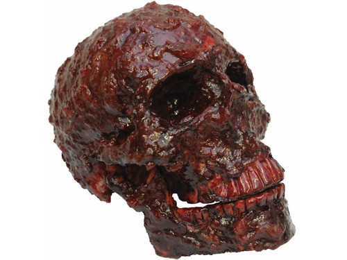 This gruesome, scabbed, bloody skull prop is made out of resin. Great for your haunted display. L - 7 inches - W - 5 inches - H - 5 inches.