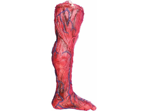 This realistic foam-filled latex rubber prop has one skinned leg up on you!  The victim appears to have had his skin removed revealing muscle tissue and veins. Gross! 23 x 10 x 4 inches
