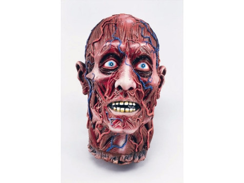 This Skinned Vein Severed Head is a realistic foam-filled latex rubber prop. Victim appears to have had his skin removed revealing muscle tissue and veins. 13 x 9 x 6 inches